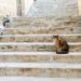 A Cat's Tale of Malta